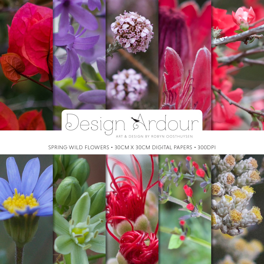 Design Ardour | Art & Design by Robyn Oosthuysen | Images | Photography | Grahamstown | Wild Flowers #photography #DesignArdour #RobynOosthuysen #Grahamstown #ILoveGrahamstown #ILG #wildflowers
