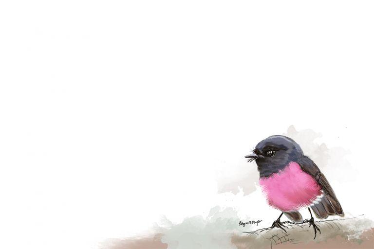 PinkRobin_Web