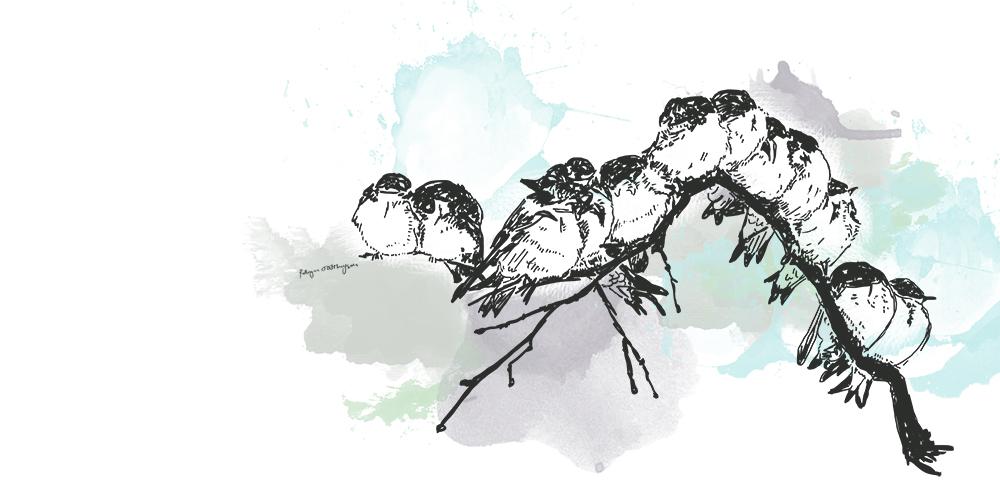 Birds-on-branch_web