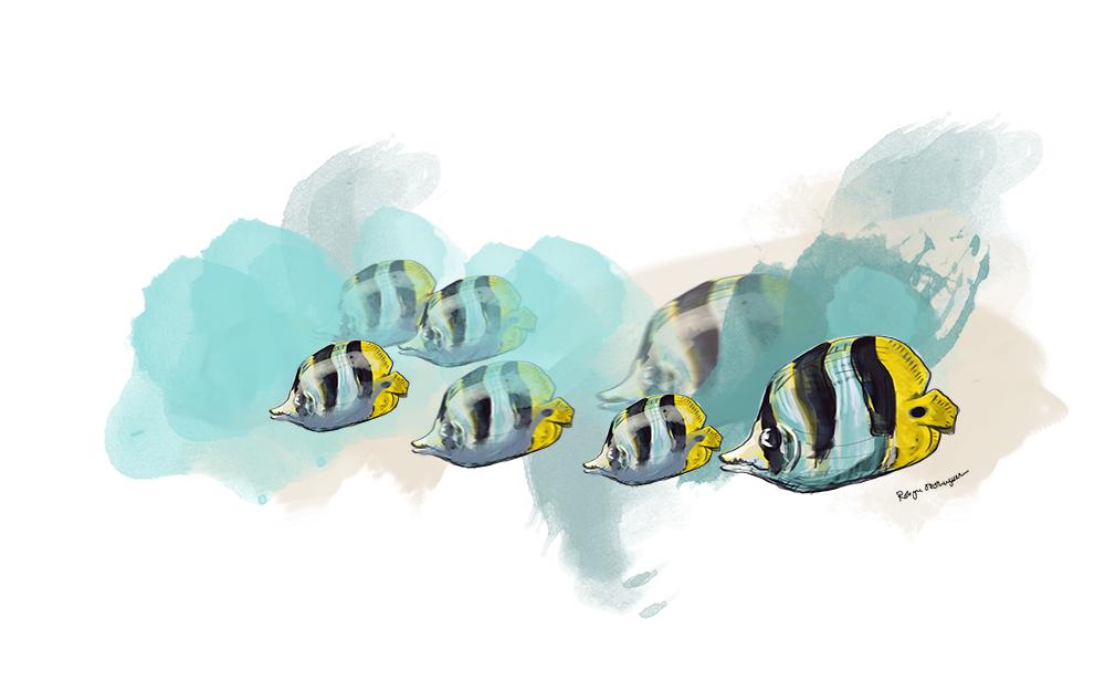 Fish01_Web