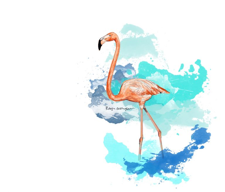 Flamingo_Web